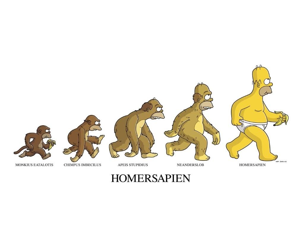 La evolucion de Homer